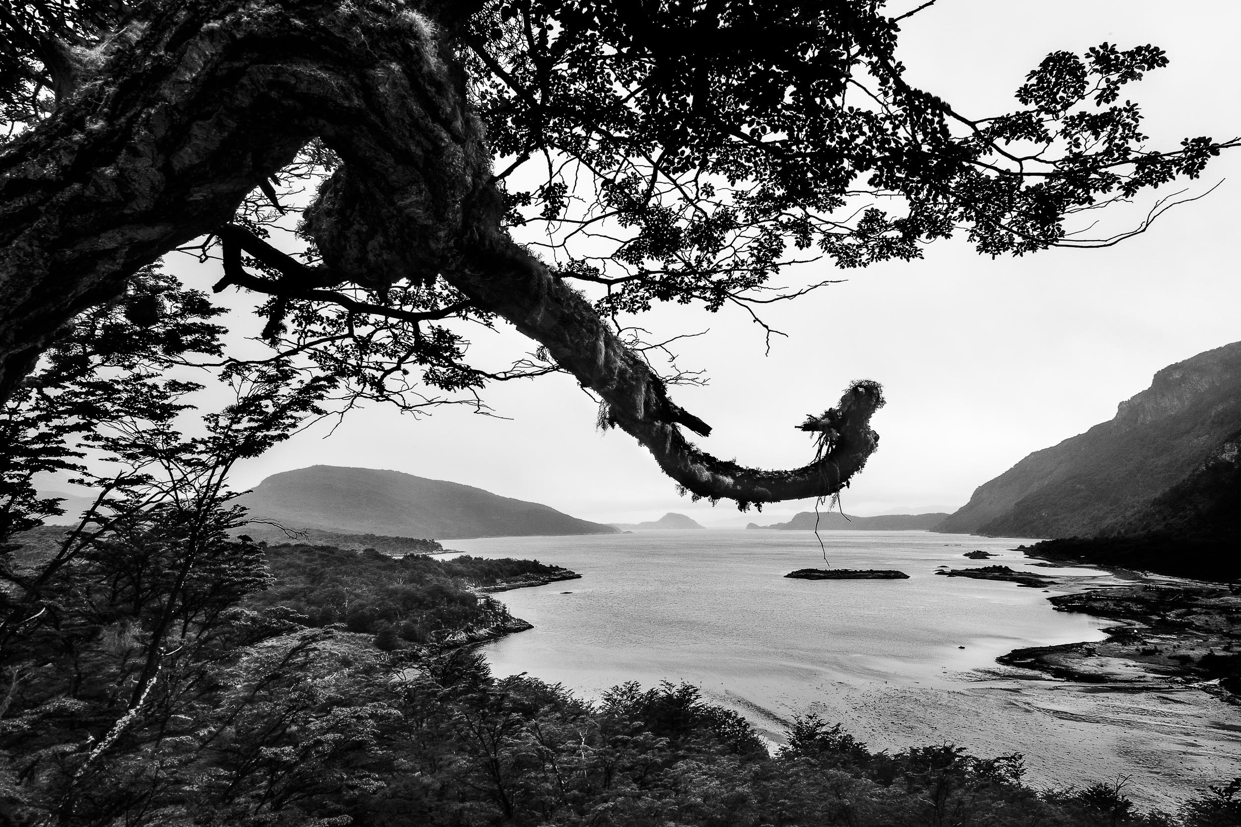 A  stark view south  from  Tierra del Fuego National Park , Argentina at the bottom of  South America .