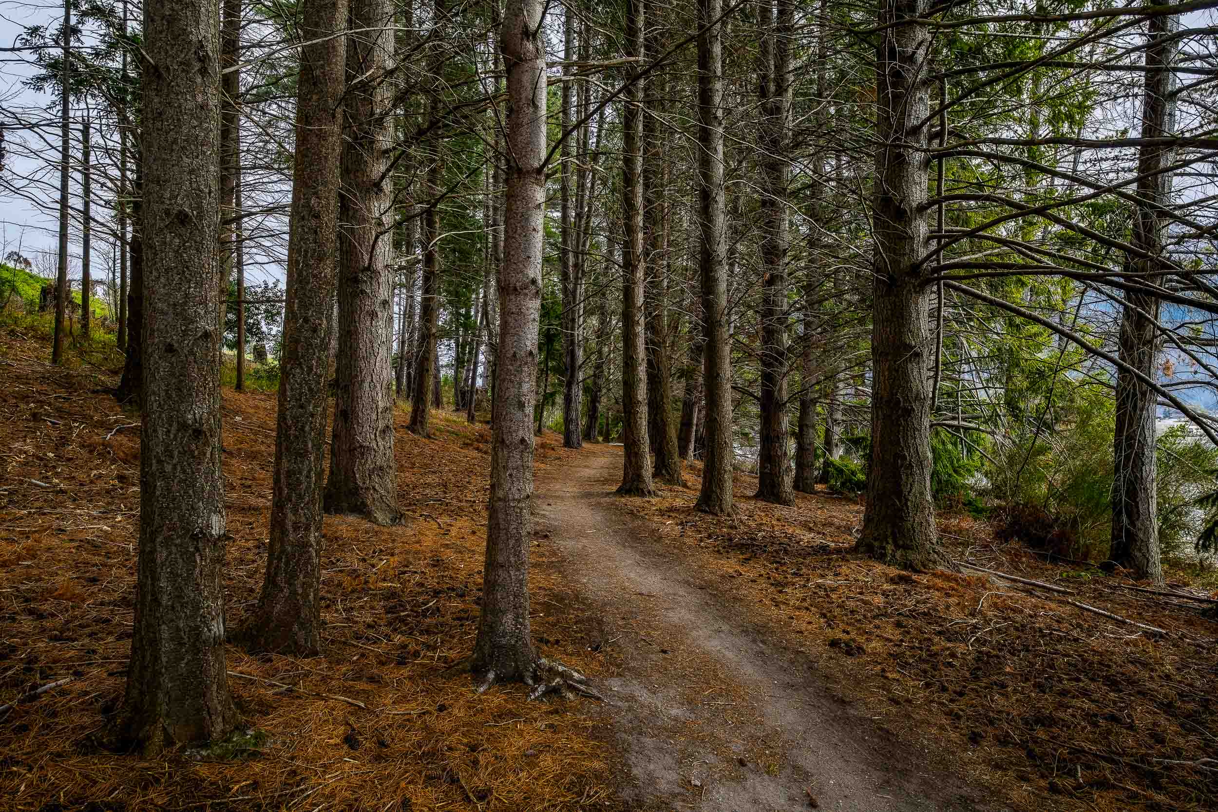 A narrow path leads through a    stand of pine trees    on the outskirts of    Queenstown    in Otago,    New Zealand   .