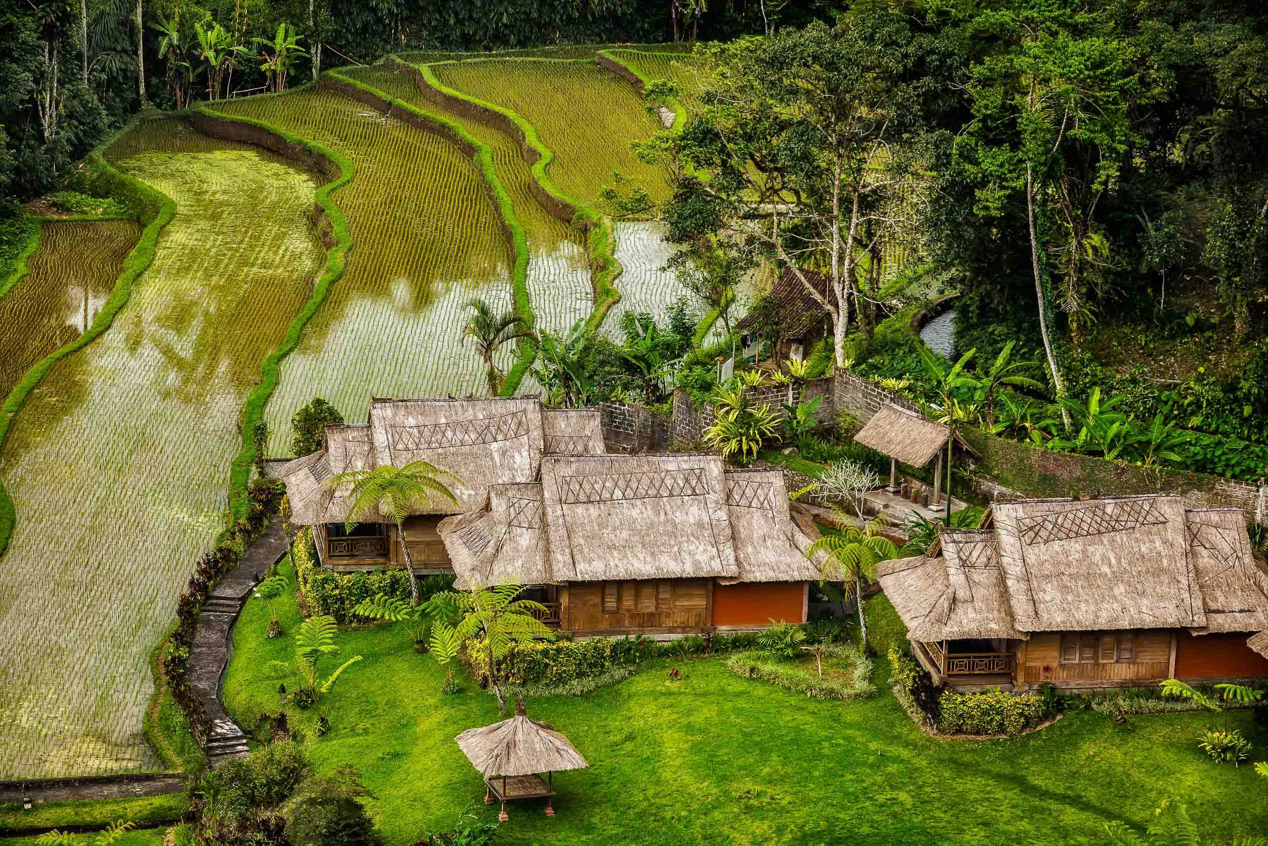 This sublime scene depicts  idyllic accommodations , alongside  terraced rice paddies , in rural  Bali, Indonesia .