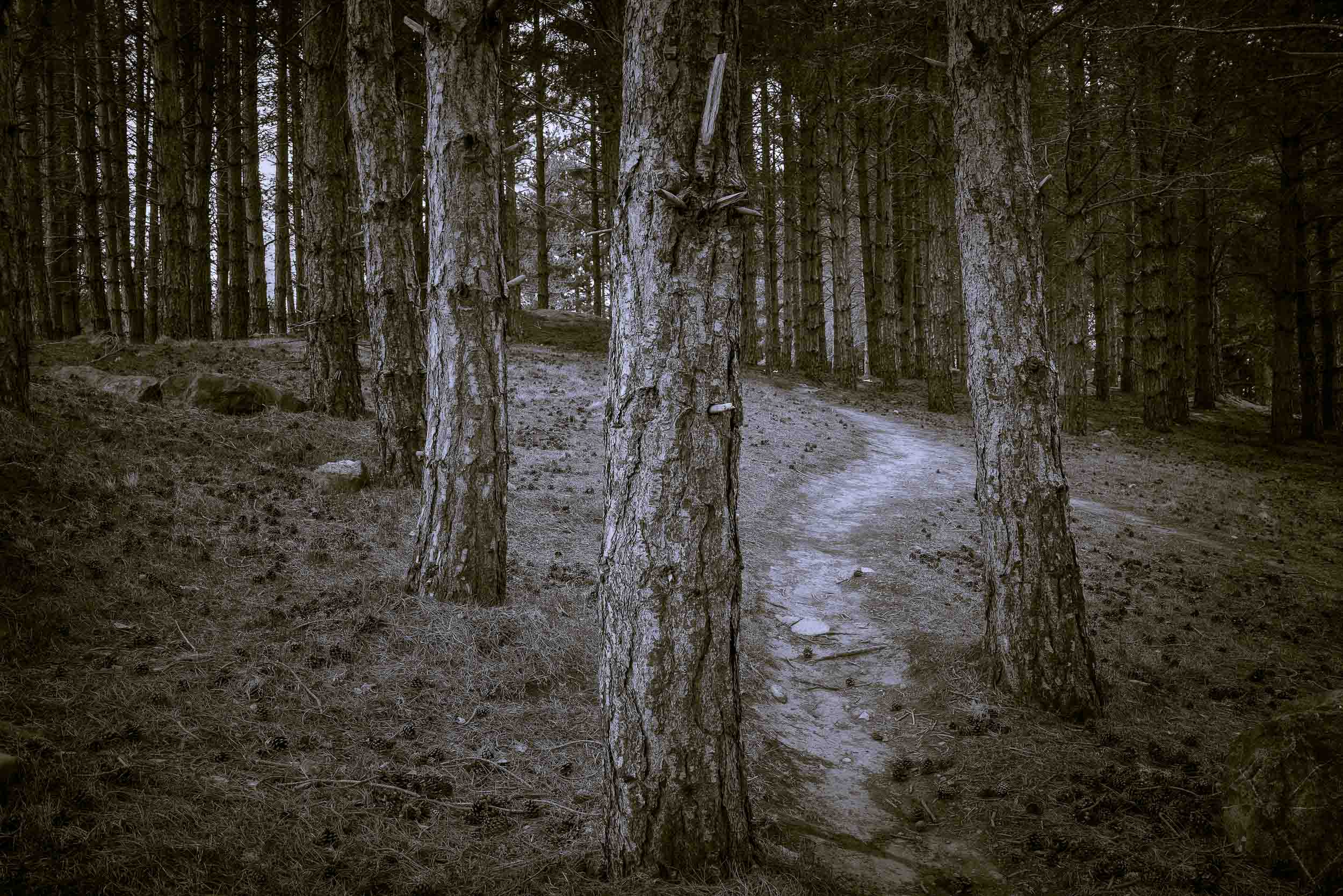 While photographing in this forested area near    Twizel    on the South Island of    New Zealand    I was reminded of '   Gollums Song'    from the    LOTR The Two Towers    movie.