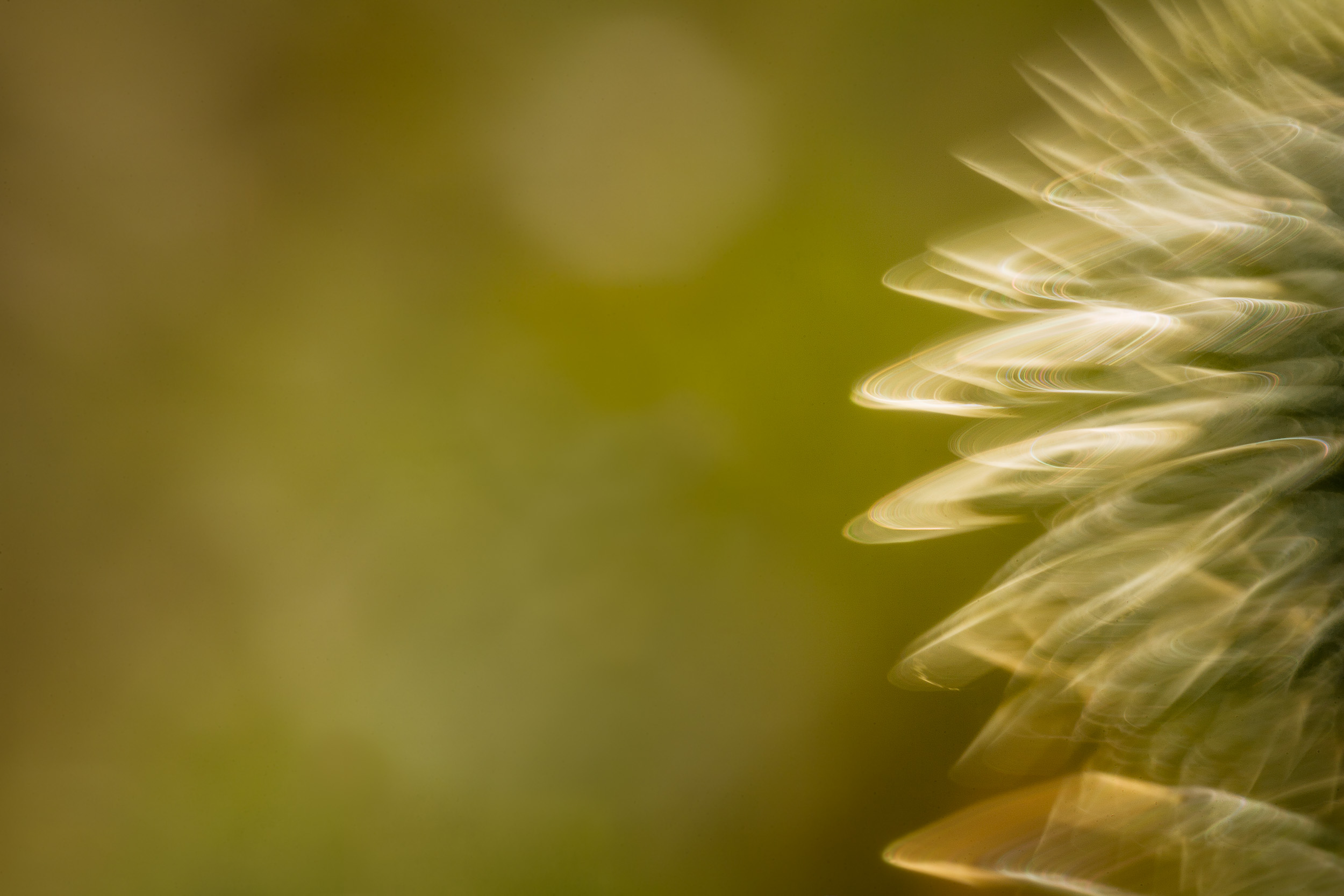 An    abstract image    of an out of focus plant backlit by warm sunset light near    Harcourt    in    Central Victoria, Australia   .