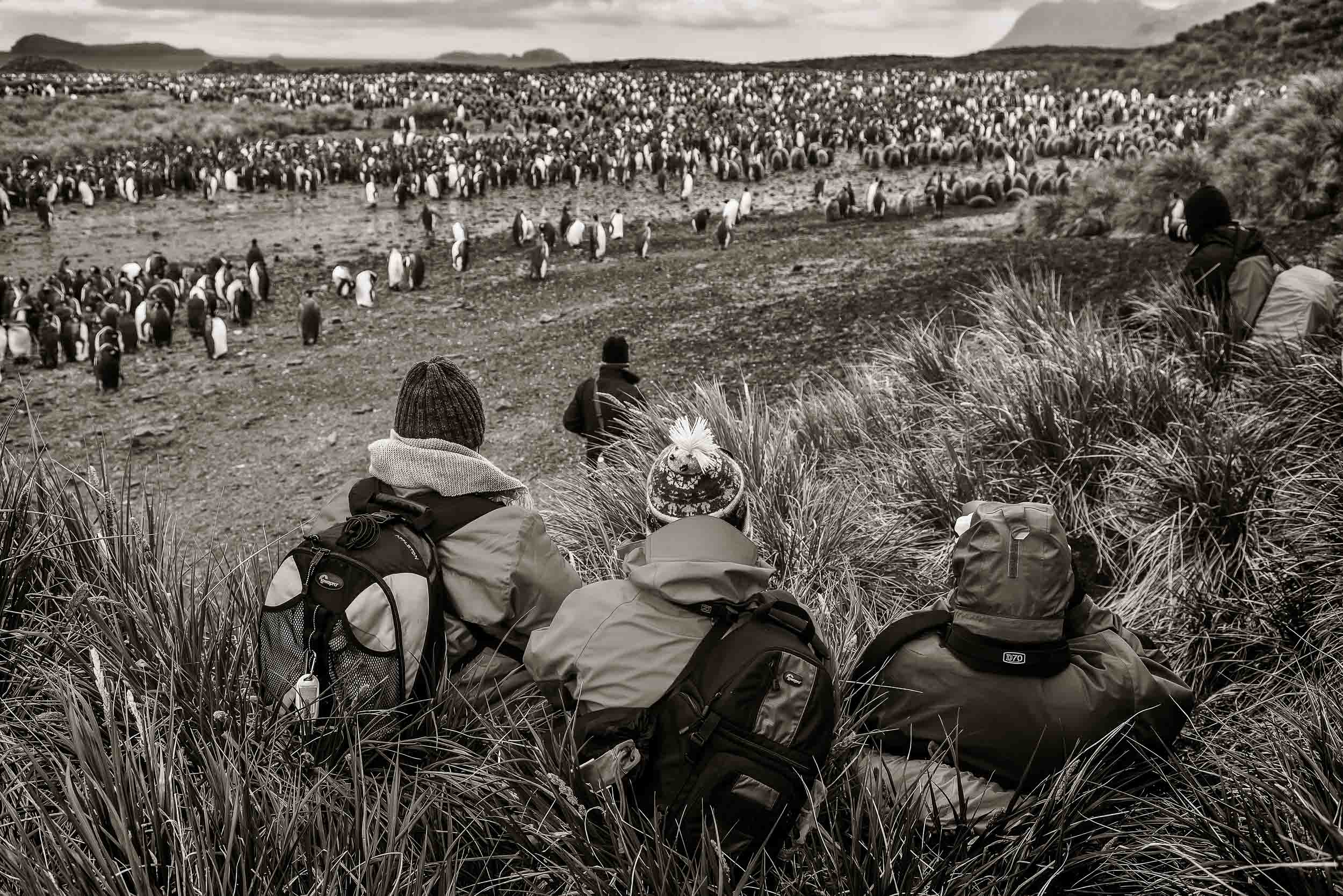 Photography tour participants admiring a large colony of    King penguins    on    Sailsbury Plain    on    South Georgia Island   .