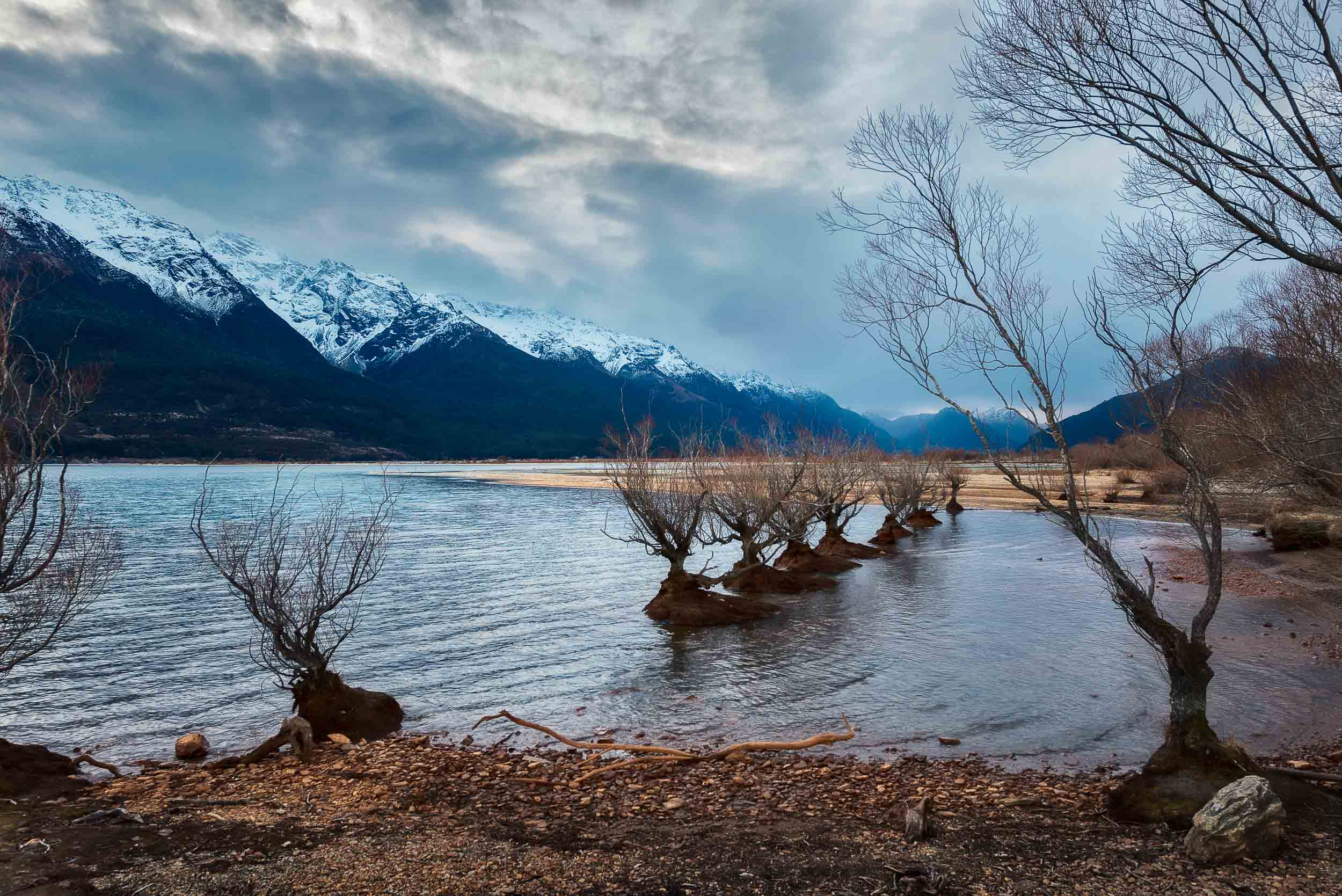 A stand of trees in the lake, at days end, in    Glenorchy, New Zealand   .