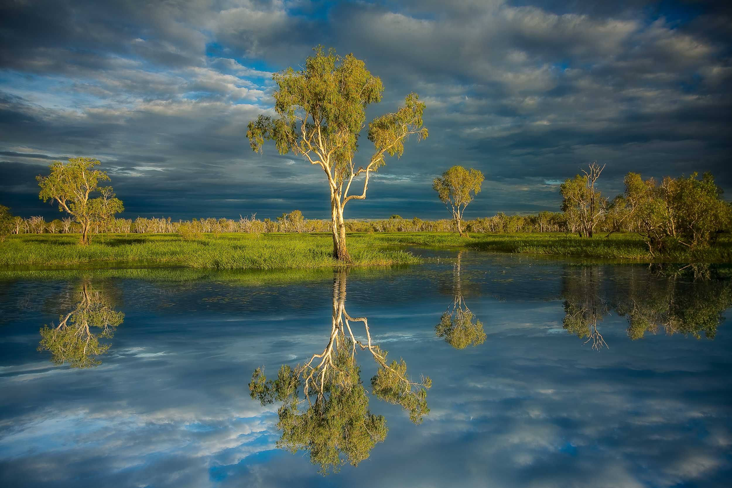A    reflection    of a large    paperbark tree    by the water's edge in    Kakadu National Park   ,    Australia   .