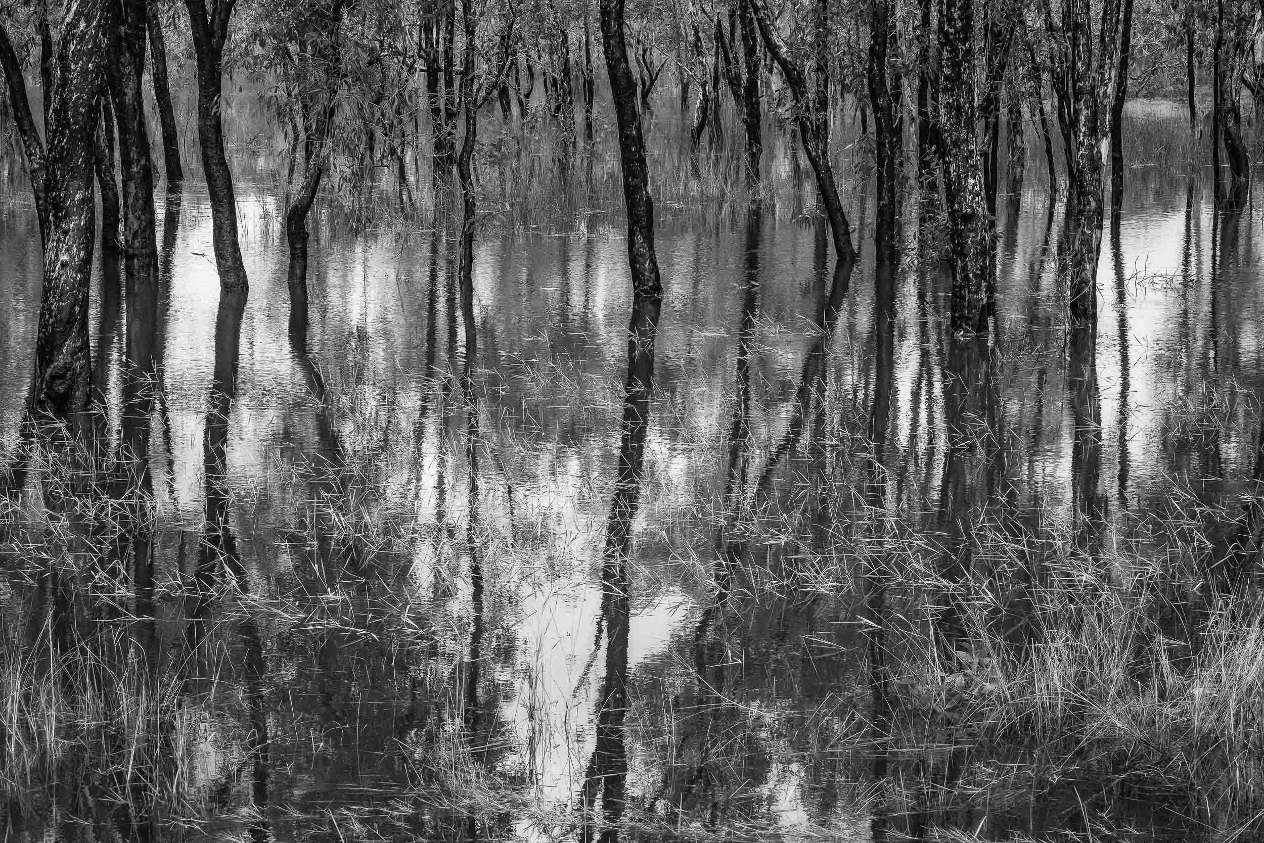 A tranquil and detailed view of a    billabong    in    Kakadu National Park, Australia   .