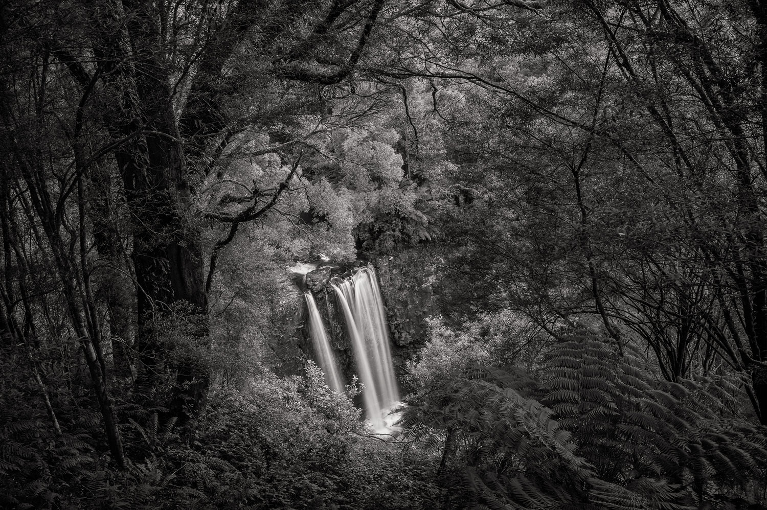 A black and white photo featuring the magnificent    Erskine Falls    and surrounding rainforest from the    lookout point   .