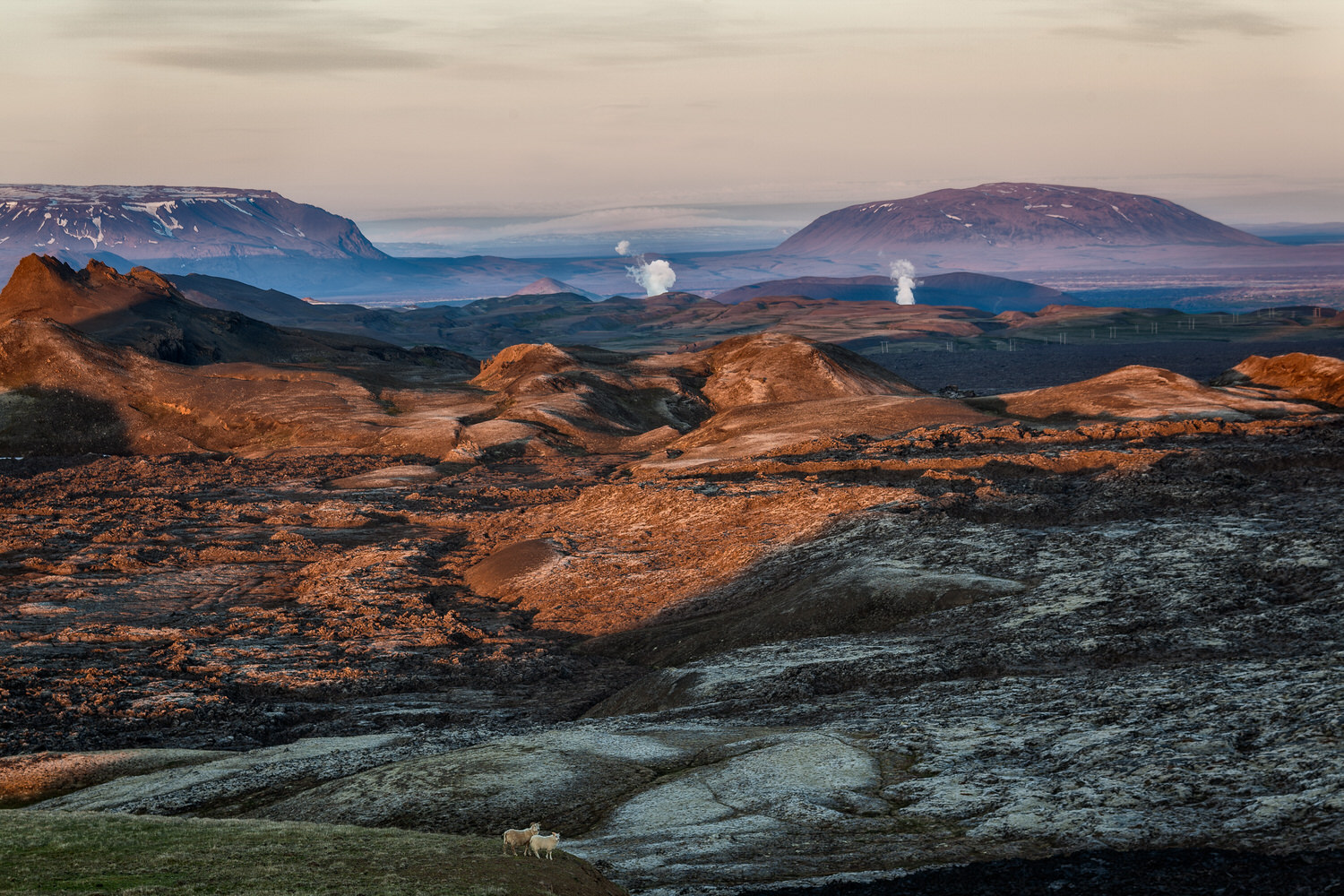 Sheep overlooking a view of ash and fumes at the    Leirhnjukur Lava Fields    in the Krafla vocanic area near    Myvatn    in    Northern Iceland   .