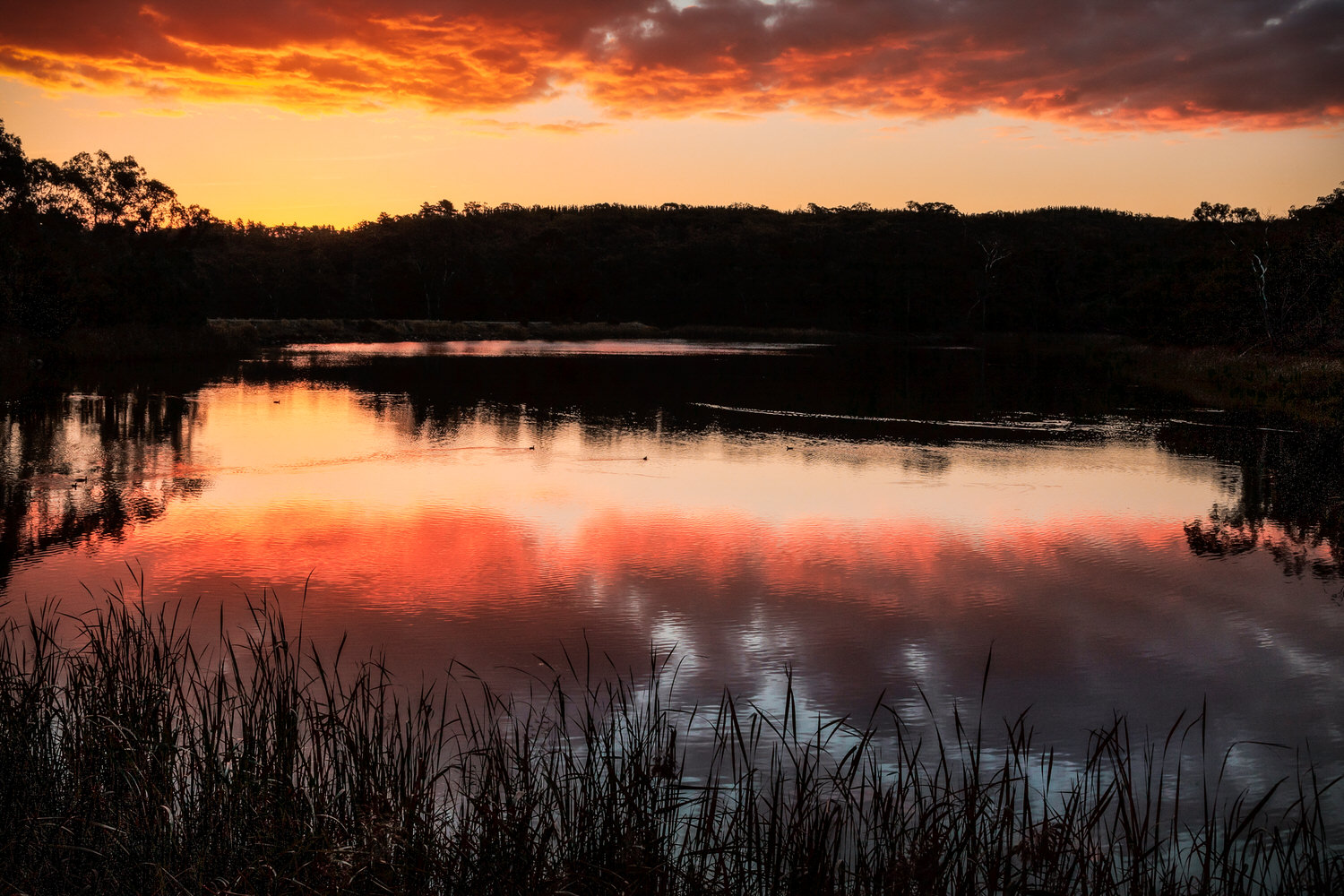 Red and orange colors dominate this    backlit sunset    scene at    Expedition Pass Reservoir    near    Chewton    in Central Victoria, Australia.