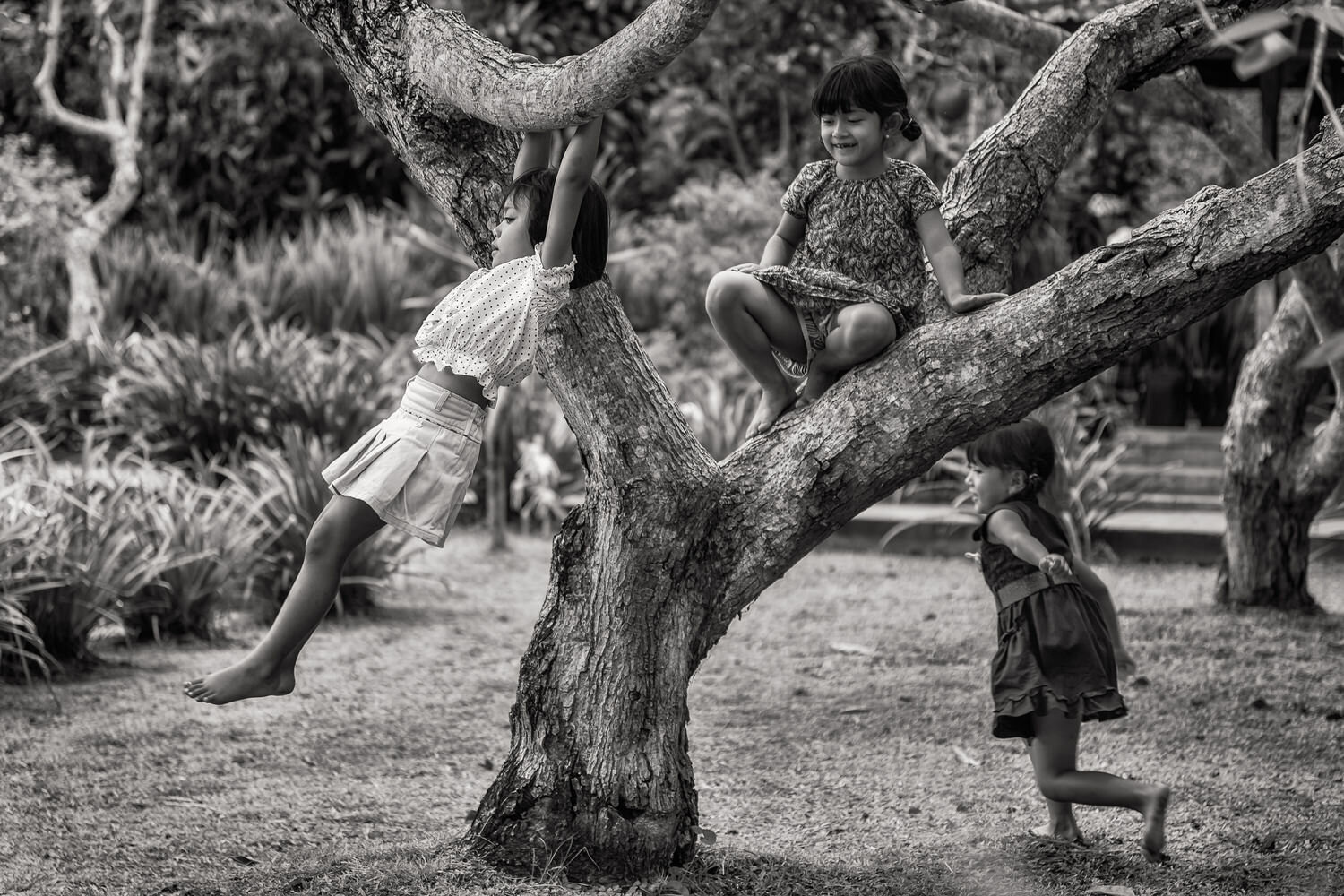 Candid photo of three girls playing around a tree in Bali, Indonesia.