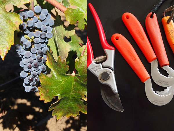 Scholium-Wine-Abe-Schoener-Grapes-Tools.jpg