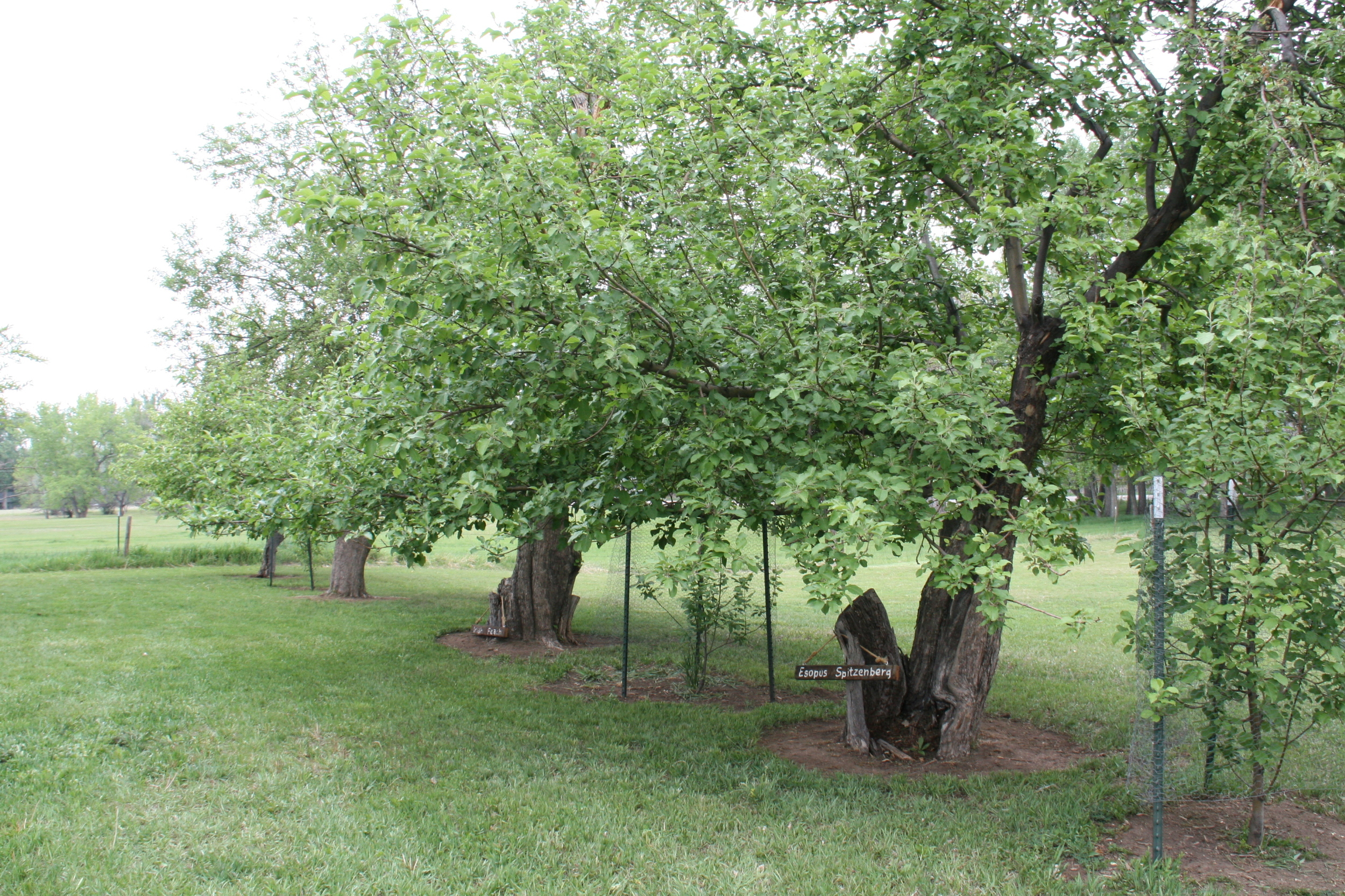 Apple orchard on Water Works grounds.