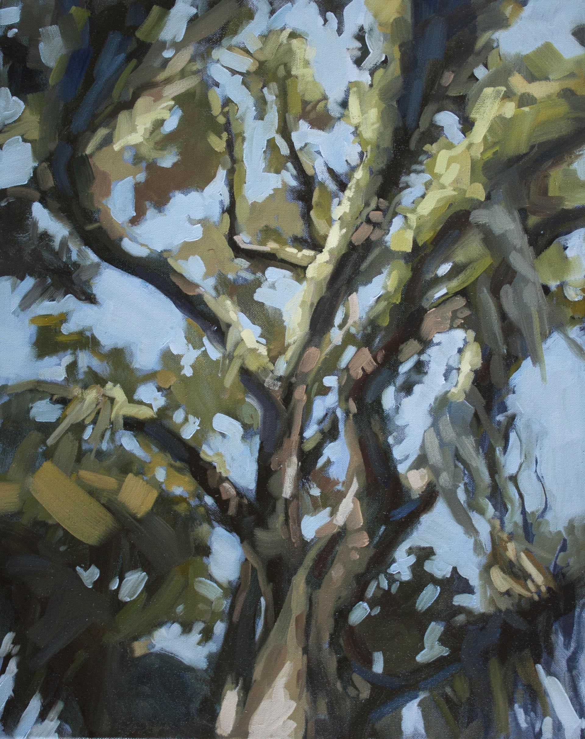 "Canopy, 24""x18"" oil on canvas"