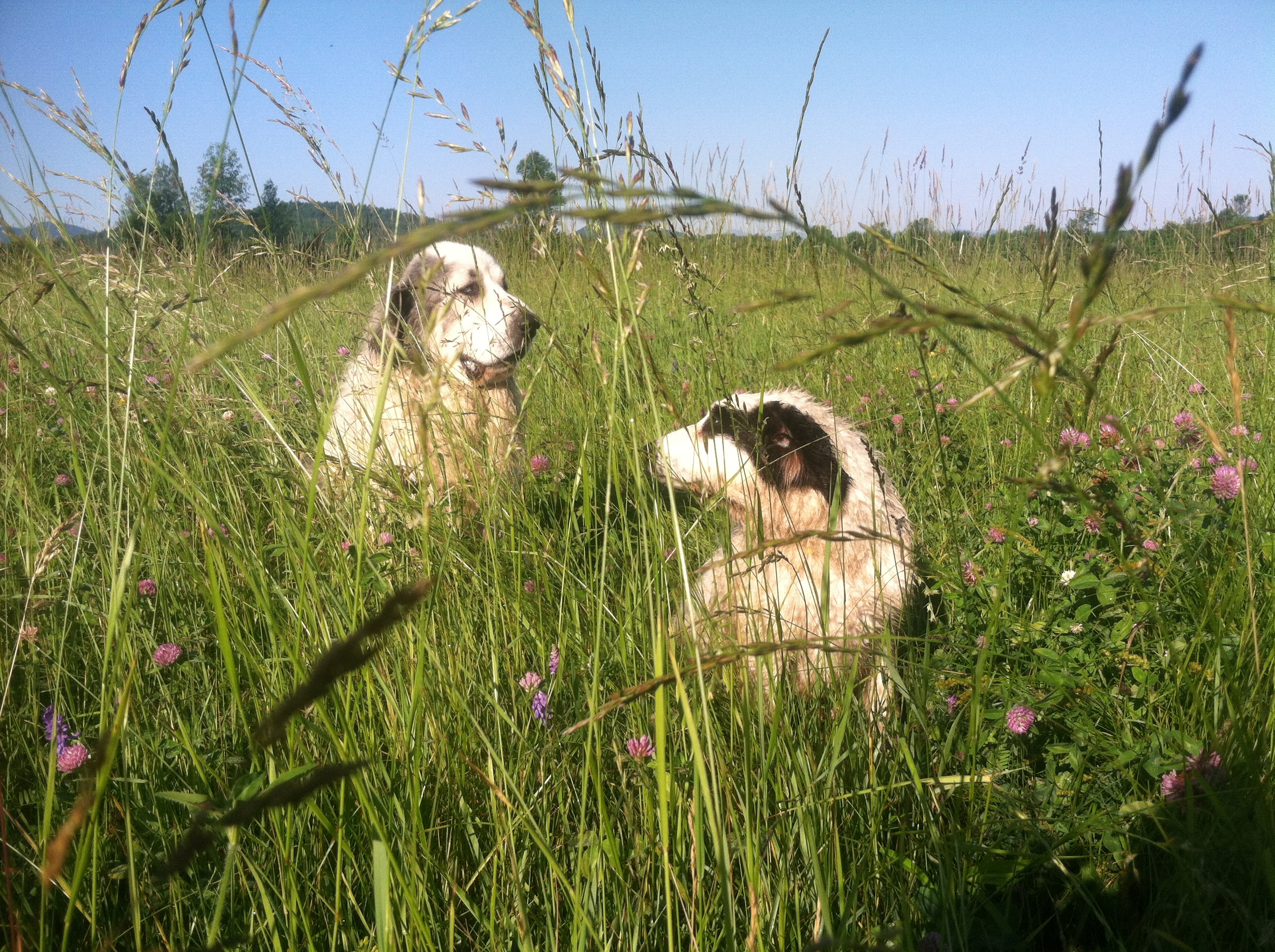 summer love & tall grass.jpg