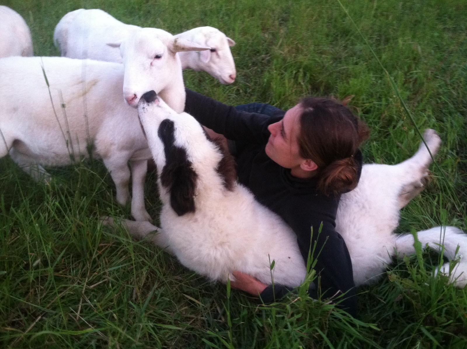 puppy sheep farmer.jpg
