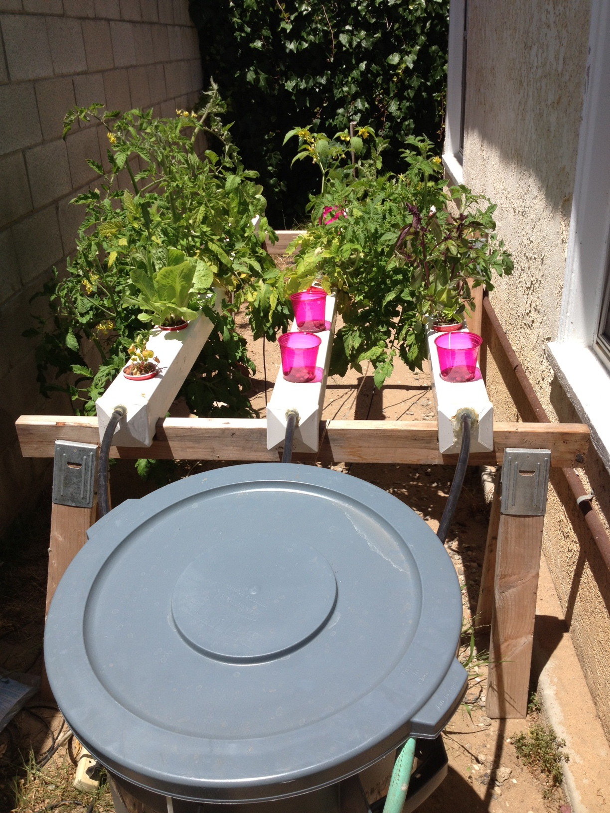 With the help of this website Jeremy A. in Manhattan beach set up this garden on the side of his house.  Awesome use of a trash can as the reservoir, I bet he only has to fill it up once a month!   But, he loses a few style points with the bright pink cups!