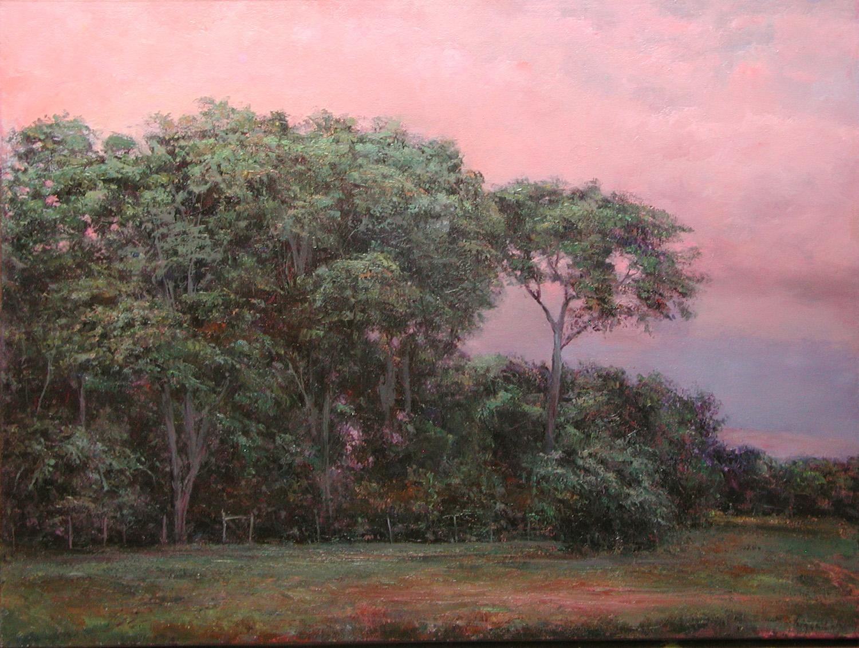 Evening Cottonwoods