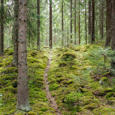 Nature trek in a moody forest, Finnish nature, Råmossa Lodge