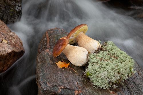 Sienet, marjat ja riistaruoat maistuvat Råmossa Lodgessa.