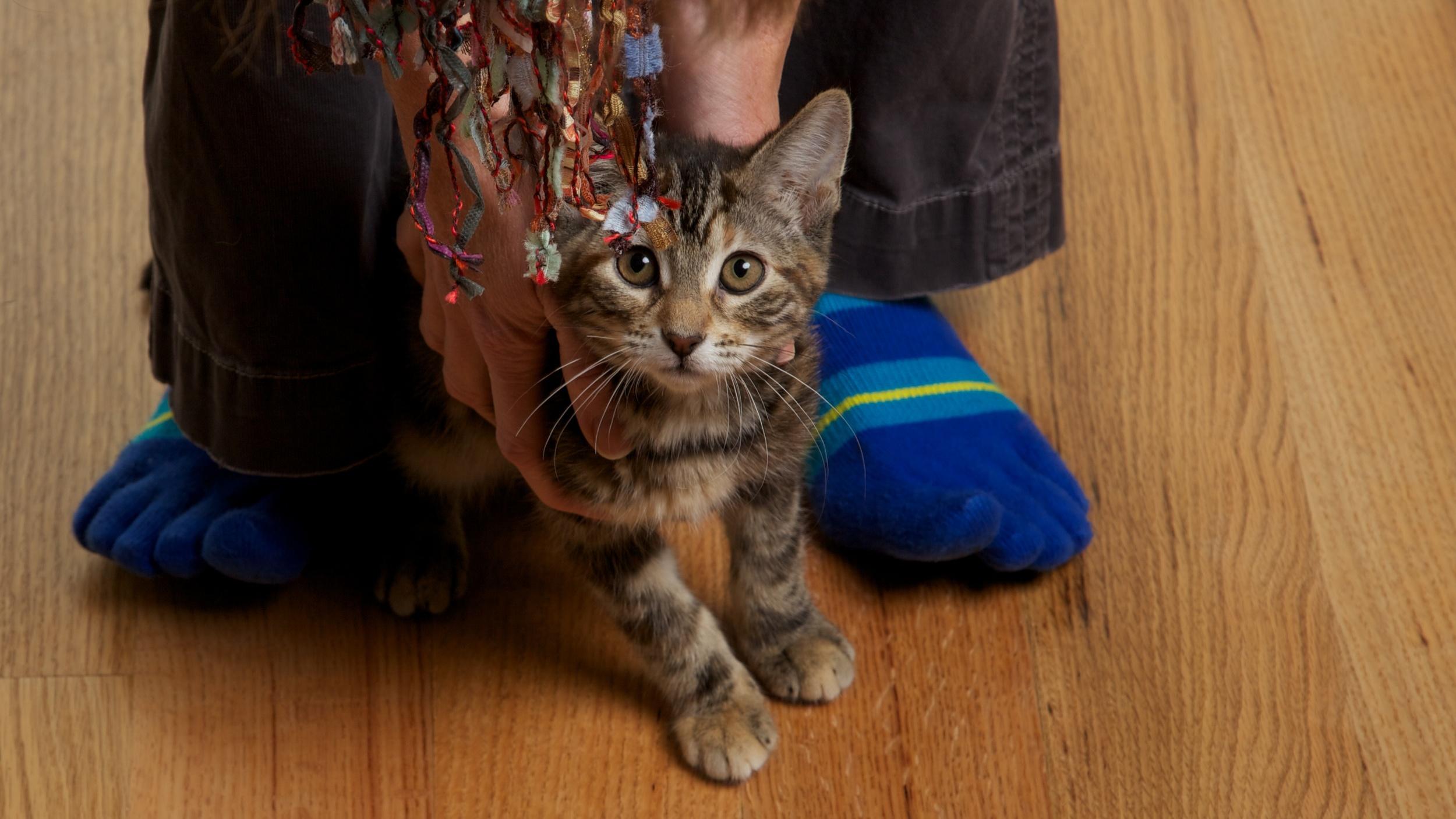 Evan & Cats (2010-1108) 67 of 77.jpg