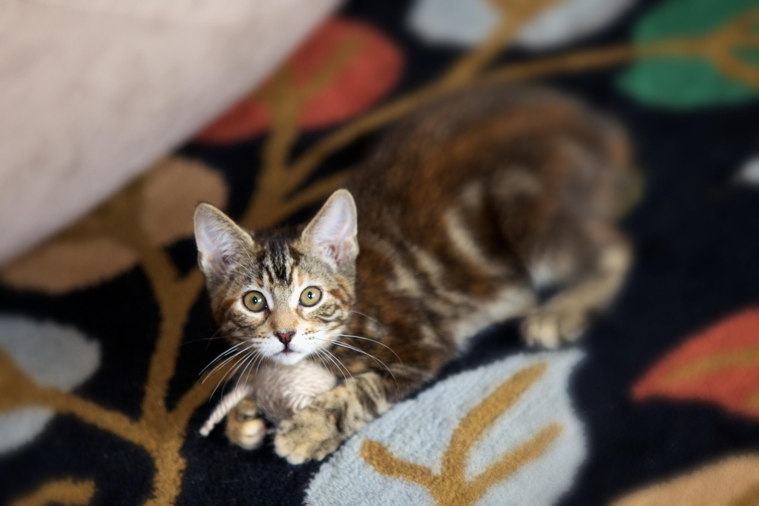 Kitties (2010-1025) 30 of 62.jpg