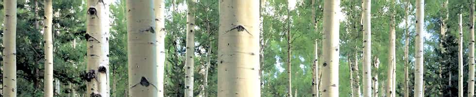 treesline.jpg