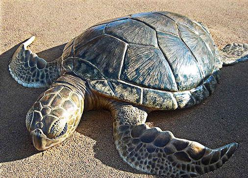 Sea World San Diego - Turtle Reef