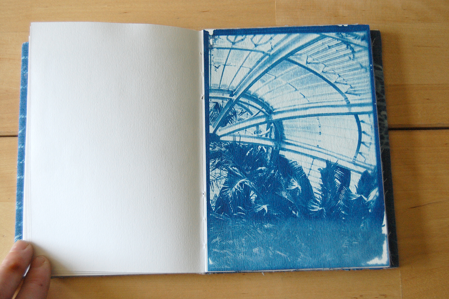 cyanotype print on paper.  image credit.