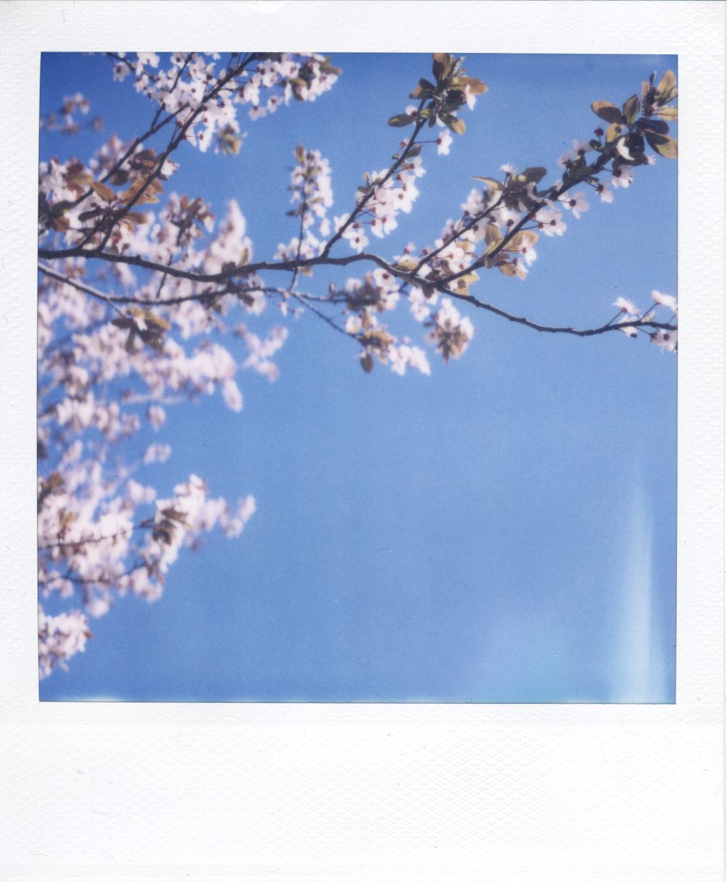 sx-70 film. beautiful blues.