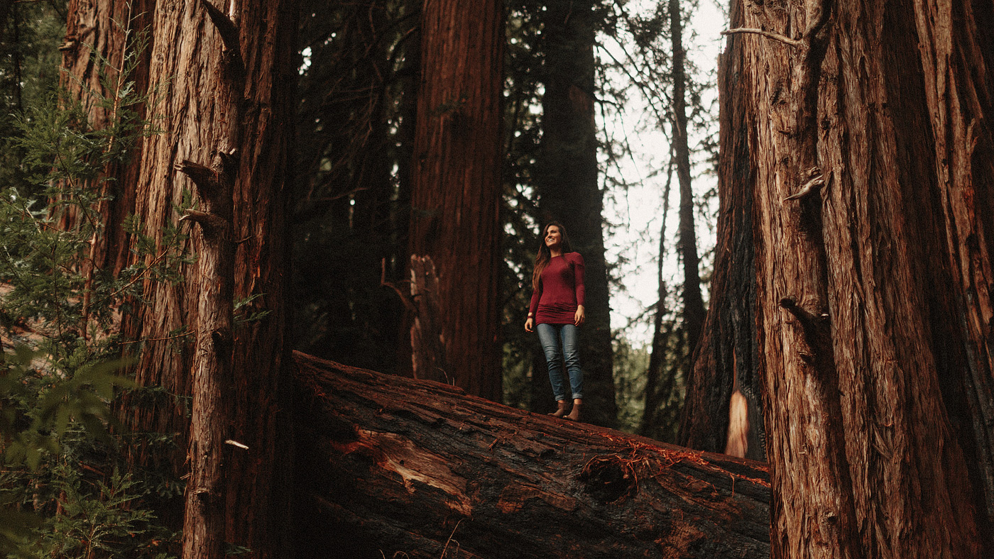 girl standing on fallen redwood tree california