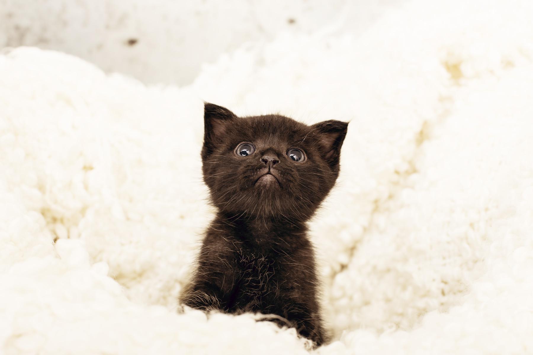 CatsIMG_2009_web.jpg