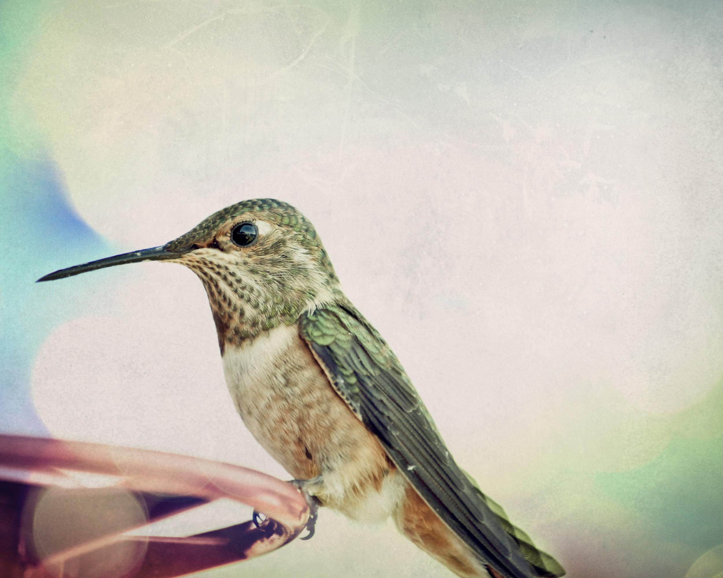 hummingbird2.jpg