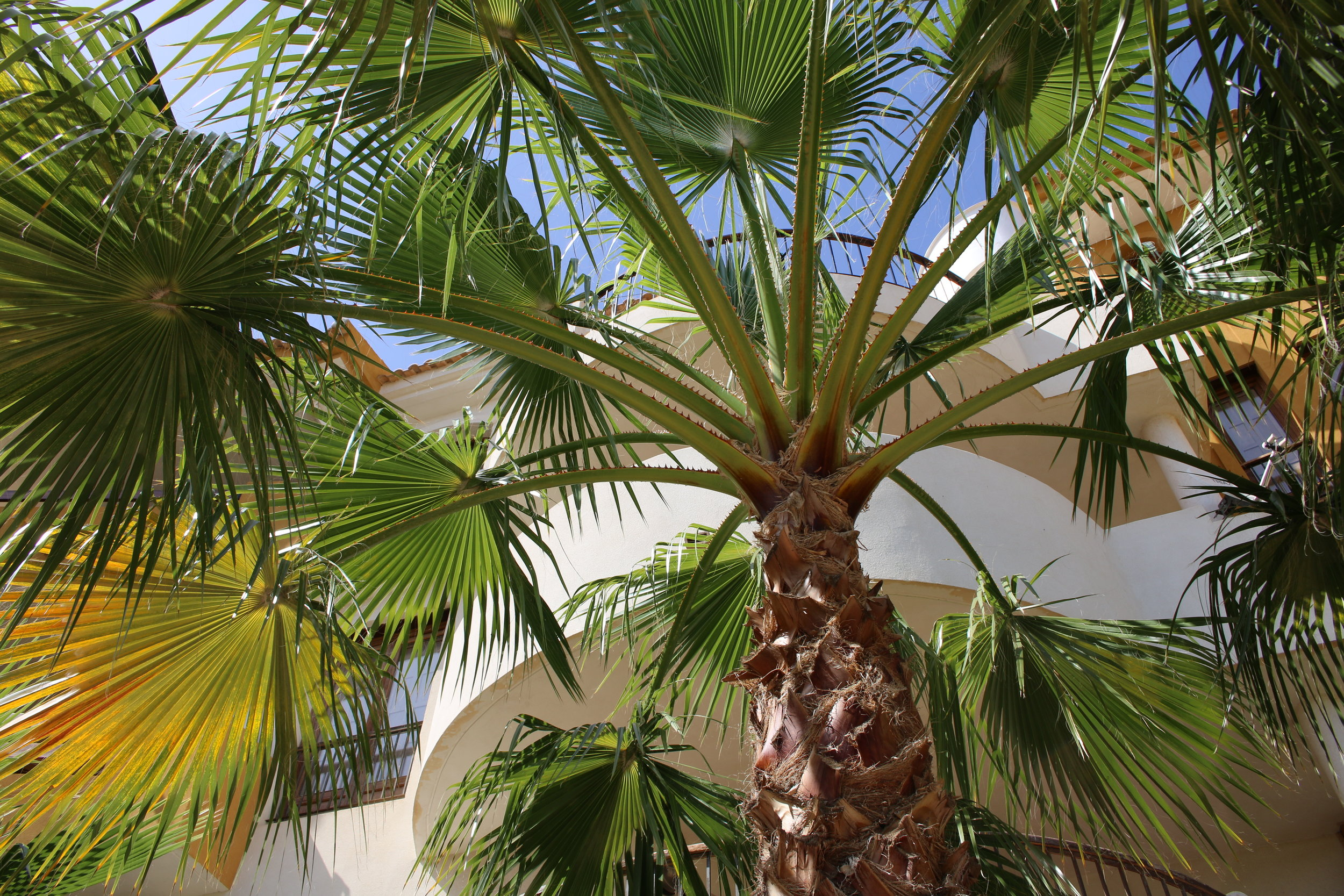 Masser af forskellige arter palmer og andre spændende planter i området.