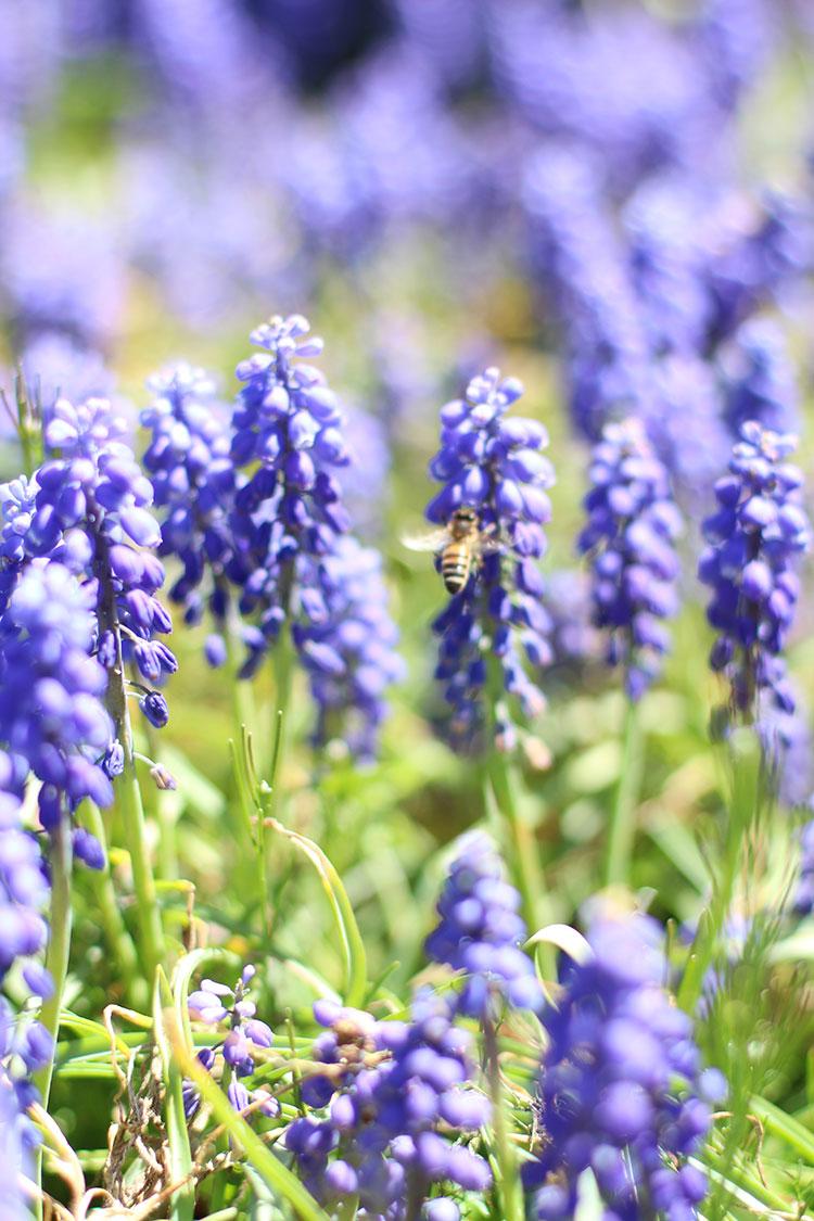 Purple-Flowers-&-Bee.jpg