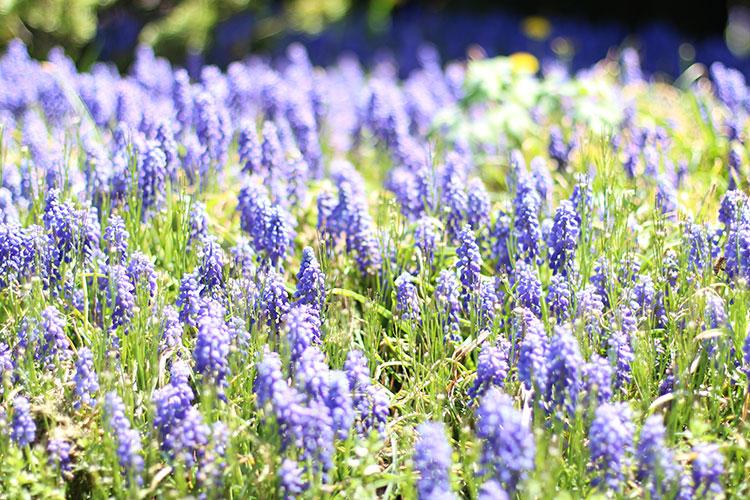 Purple-Flowers.jpg