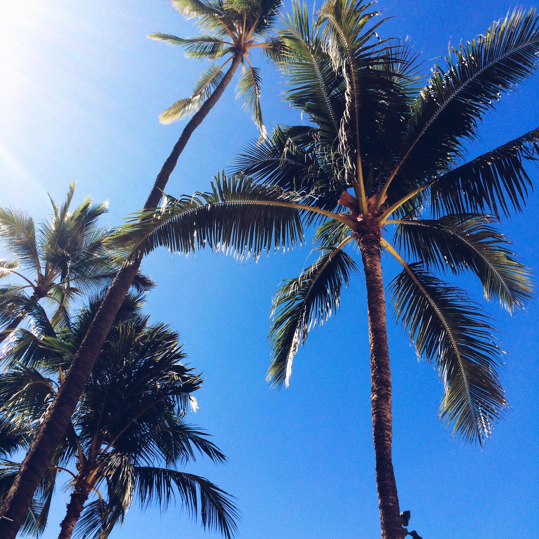 Palm Trees, Waikiki Beach