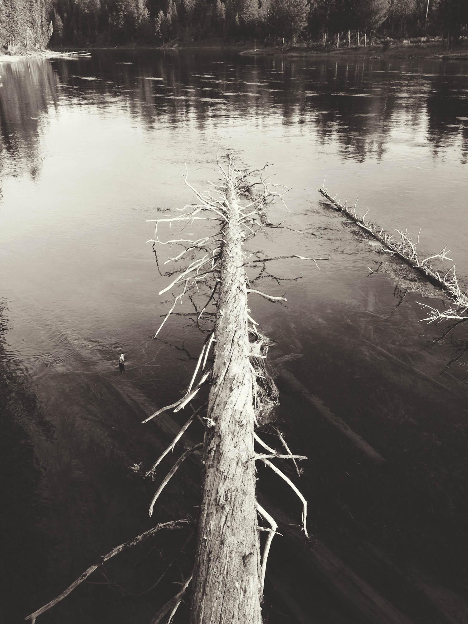 Fallen Tree, Henry's Fork, Island Park, Idaho 2013