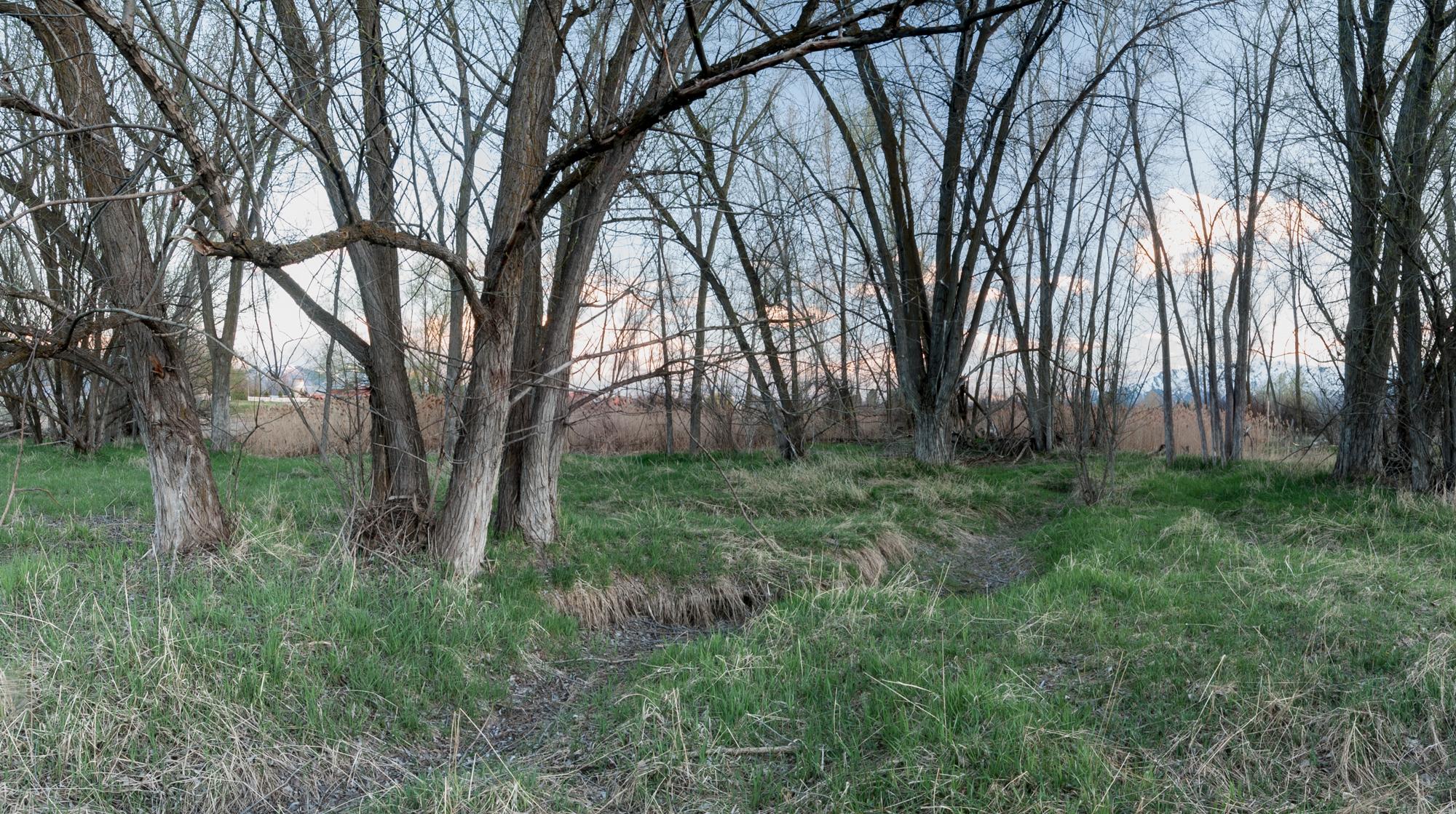 Cottonwoods, Ditch, Benson, Utah, 2016