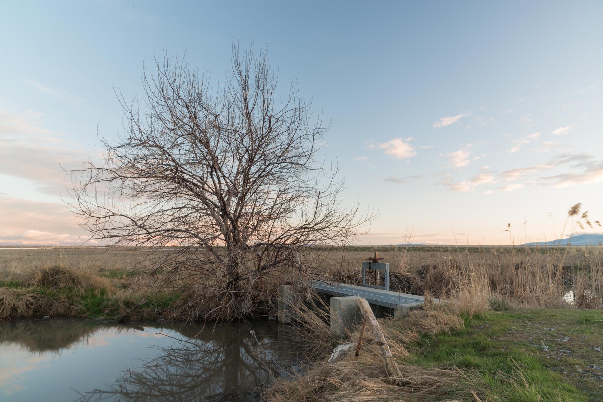 Head Gate, Bear River Migratory Bird Refuge, Utah 2017