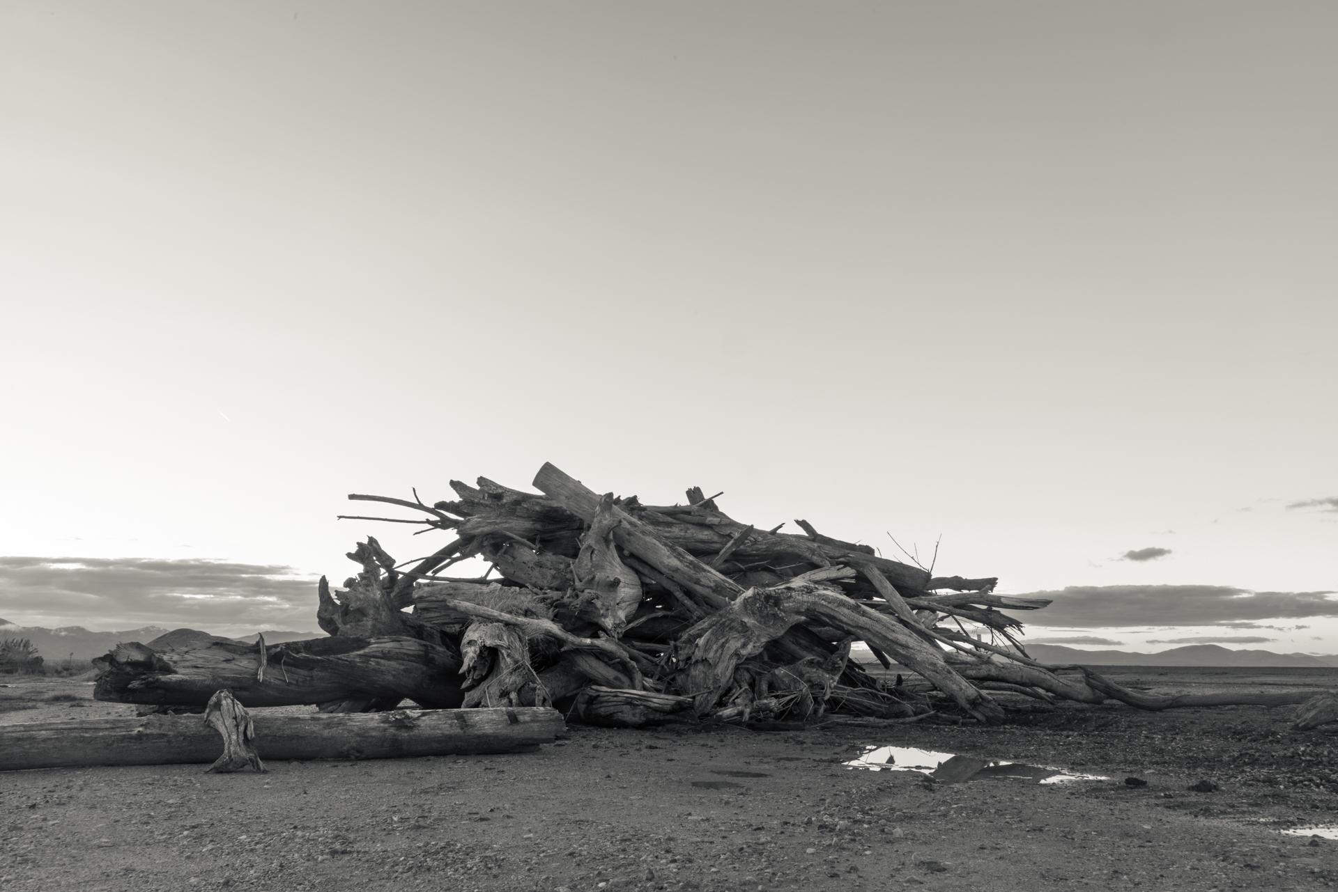 Debris Pile, Bear River Migratory Bird Refuge, Utah 2017