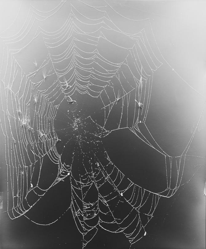 KleaMcKenna-Web-Study--19_670.jpg