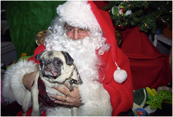 Take your pet's photo with Santa day. Brooklyn, NY 2008.