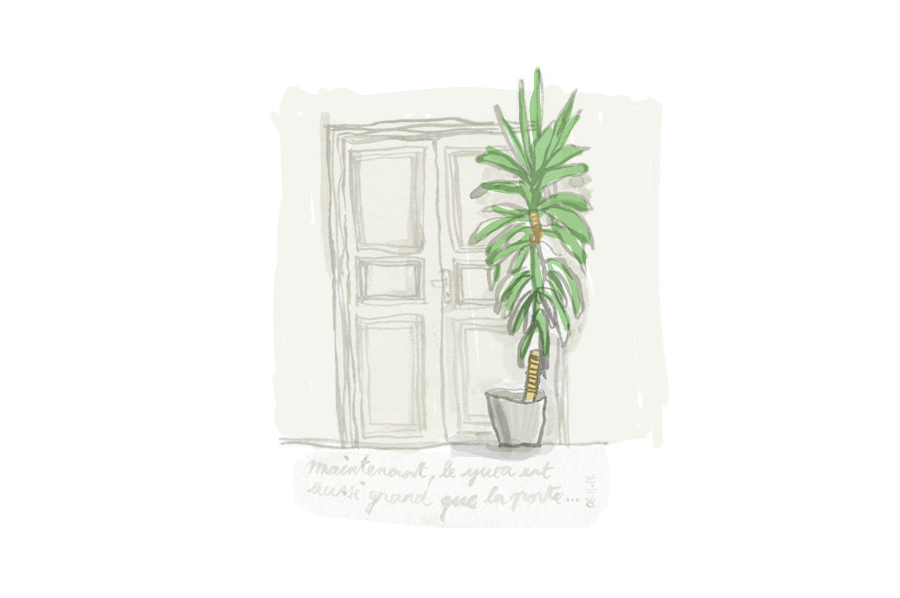 """Now the yucca is as tall as the door ...""  Ink on paper and photoshop colouring"