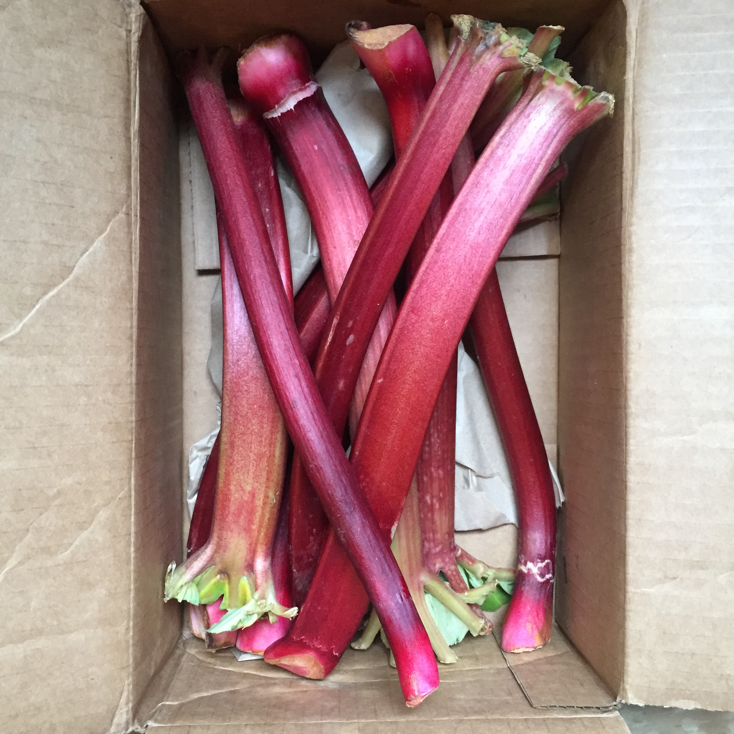 Beautiful rhubarb from  Melissa's Produce!