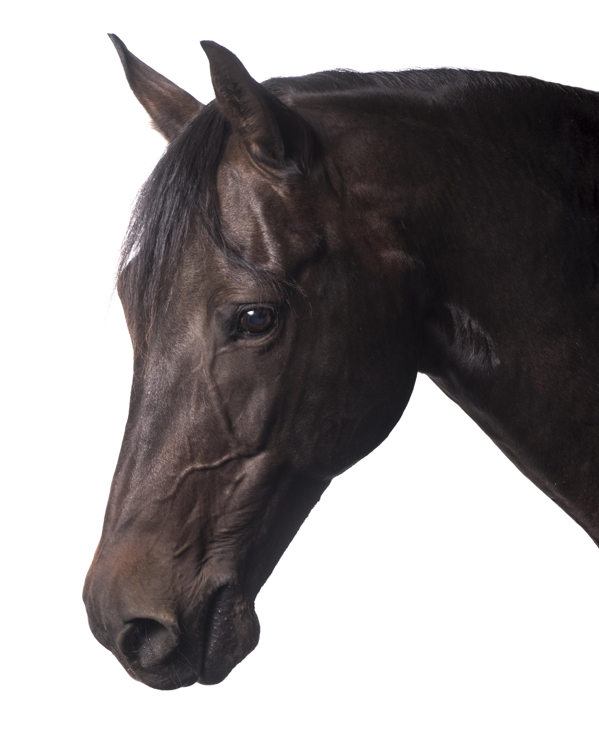 Horses-037-Edit.jpg
