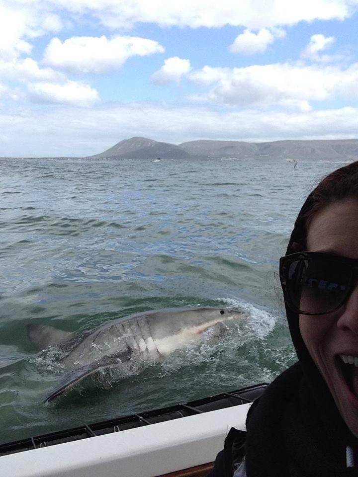 Shark! Cape Town, South Africa
