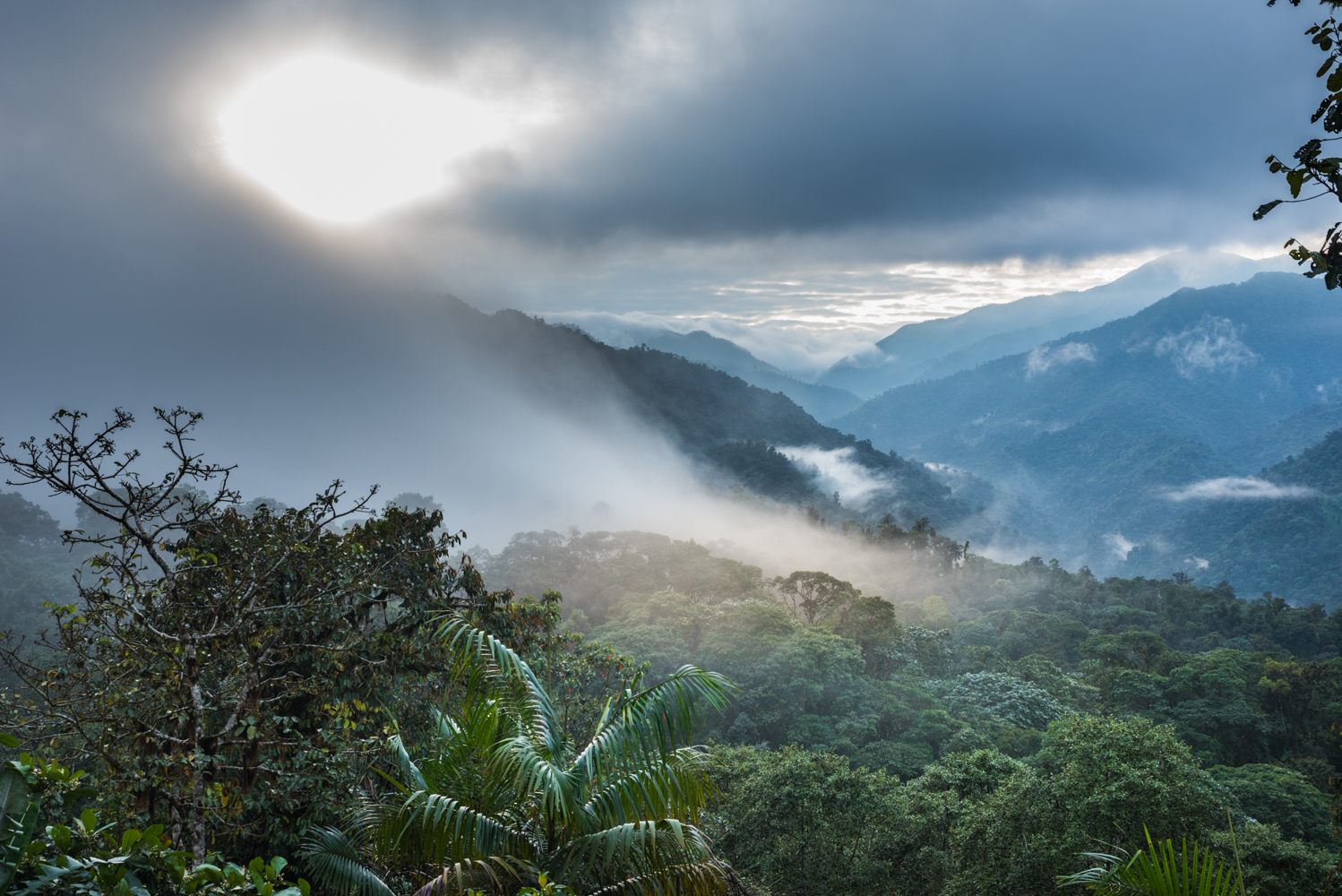 Cloud Forest, Ecuador