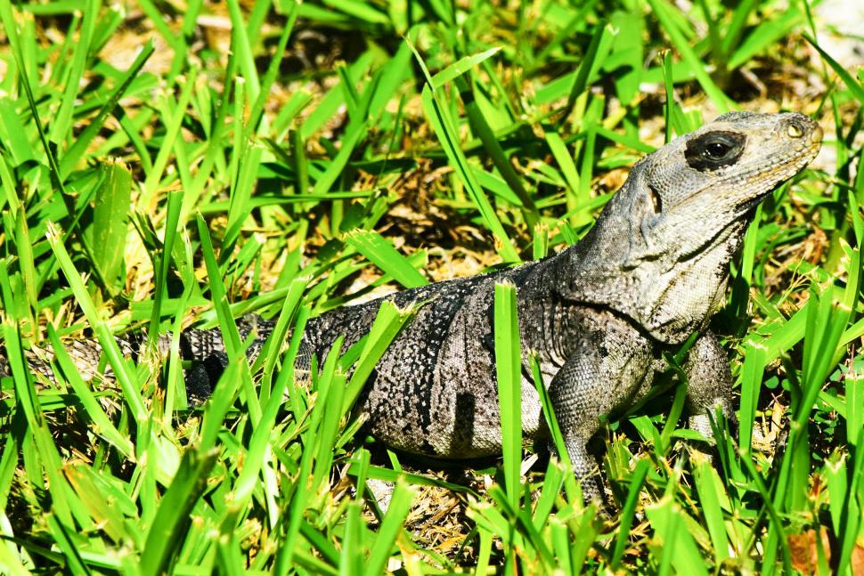 Belize-new-110.jpg