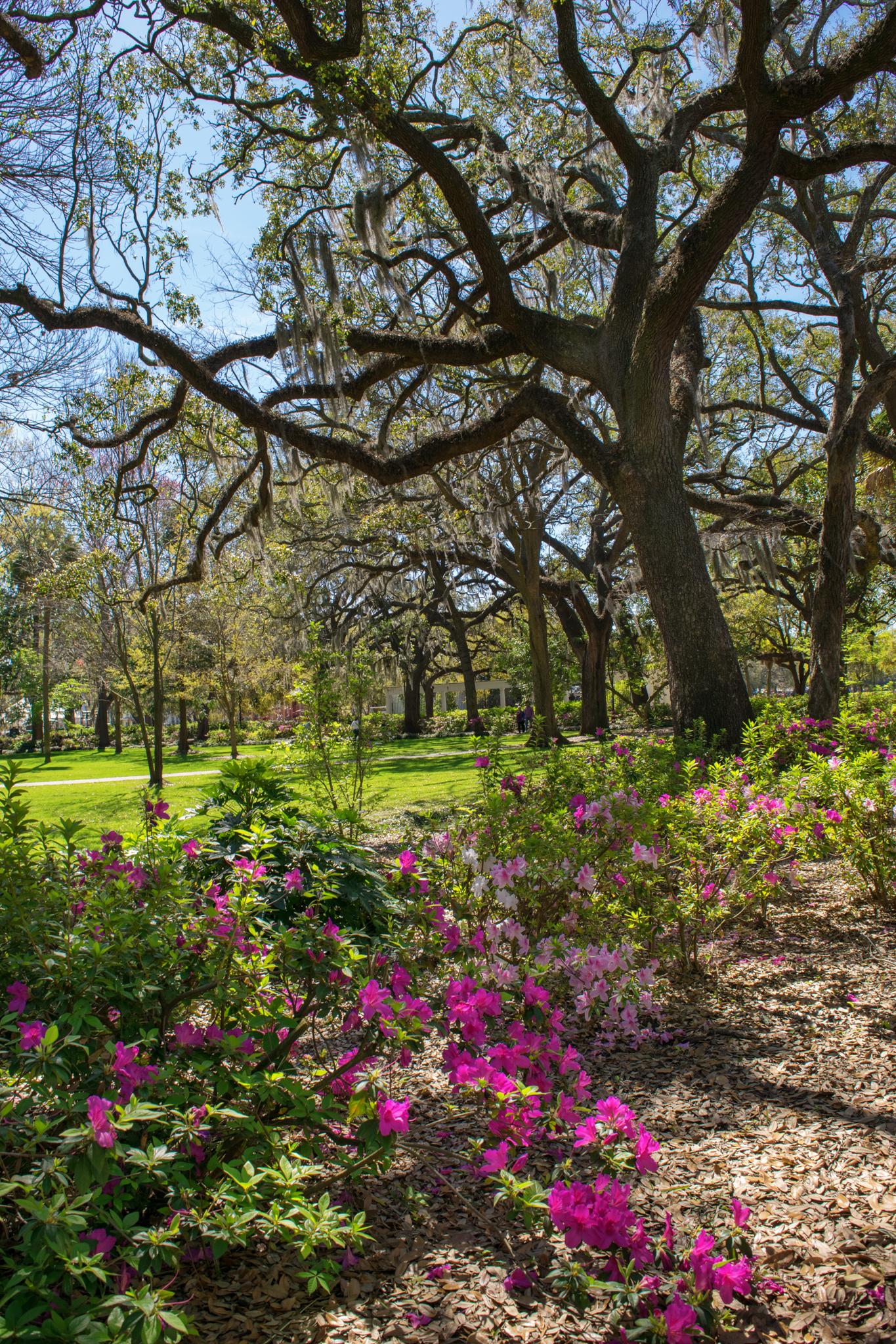 Springtime in Forsyth Park