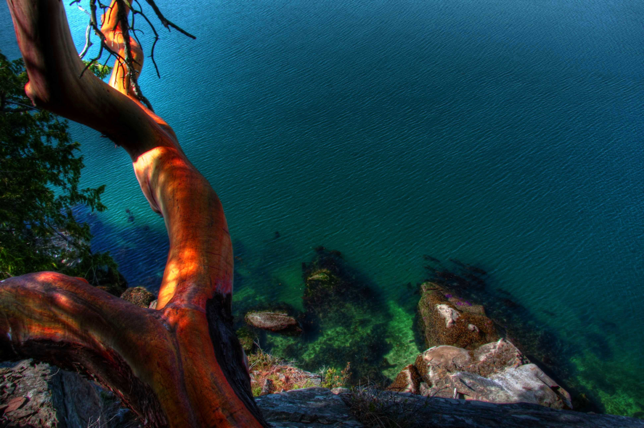 Arbutus on a cliff