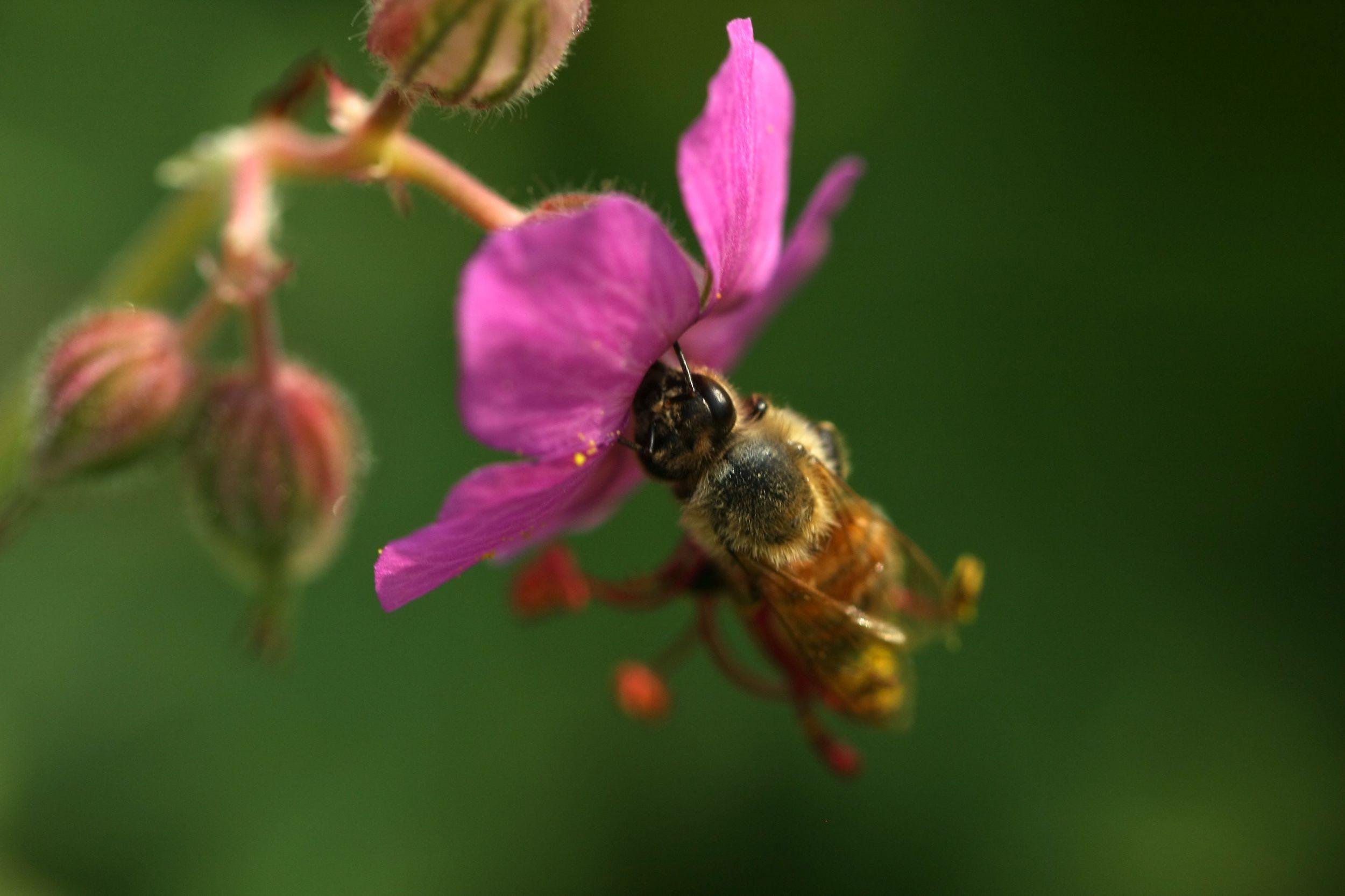 Pollen transport